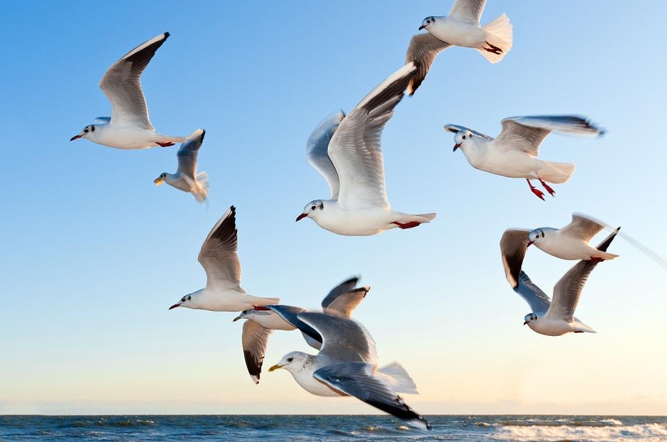 gulls-370012_960_720.jpg