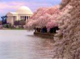 DC 樱花节National Cherry Blossom Festival