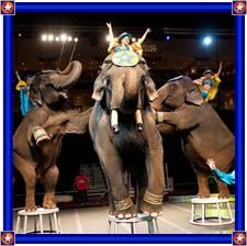 达拉斯Shrine 马戏团