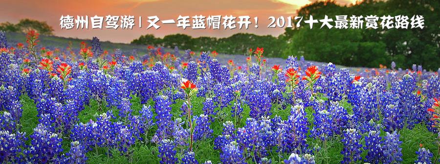 德州自驾游   又一年蓝帽花开!2017十大最新赏花路线