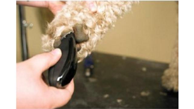 Wahl 宠物专业修毛器套装 10件